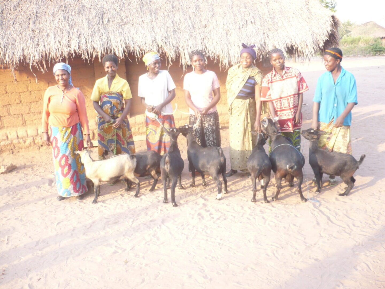 People beside goats